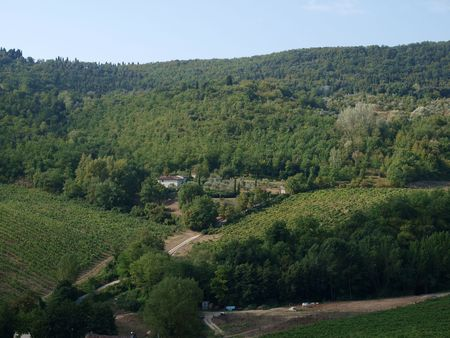 winegrowing: Vineyards and olive fields in Chianti, Tuscany Stock Photo