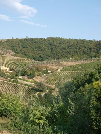 Vineyards and olive fields in Chianti, Tuscany Stock Photo - 6837718