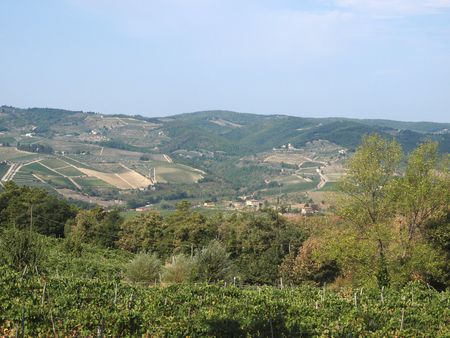 Vineyards and rolling hills in the Chianti countryside Stock Photo - 6837790