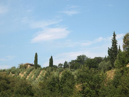 Vineyards and rolling hills in the Chianti countryside  photo