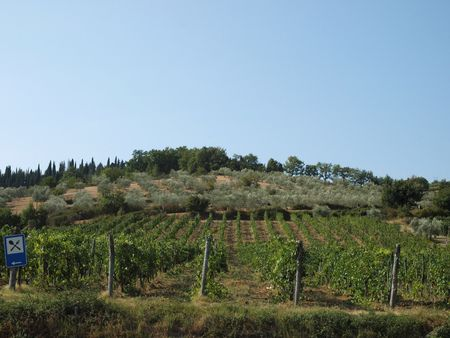 chiantishire: Vineyards and olive fields in Chianti, Tuscany Stock Photo