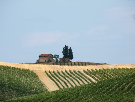 Tuscany - solitary old house on the hill amongst vineyards  photo