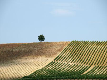 Tuscan landscape in the best edition 版權商用圖片 - 6924752