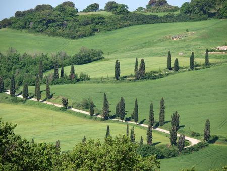 cypress: The landscape of the Val d'Orcia. Tuscany. Italiy Stock Photo