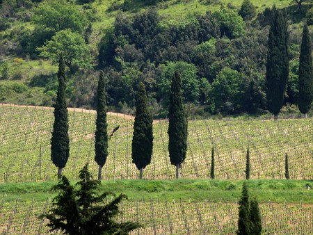 valdorcia: Tuscan landscape with vineyards and cypresses Stock Photo