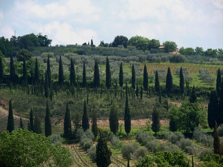Tuscan landscape with vineyards and cypresses photo
