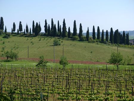 valdorcia: The landscape of the Tuscany. Italiy