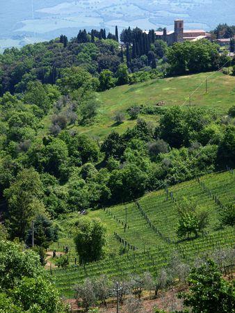The hills around Montalcino, Tuscany, Italy photo