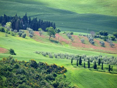 The landscape of the Val d�Orcia. Tuscany. Italy Stock Photo - 7919500