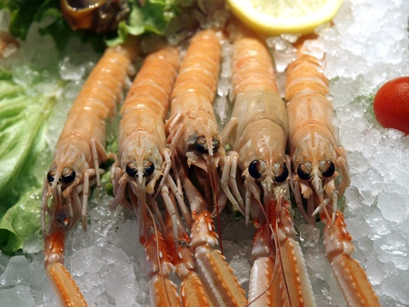 seafood market- raw prawns in ice photo
