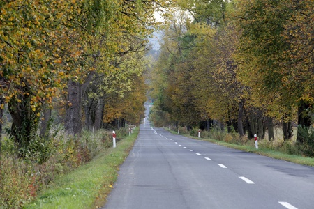 ong, straight road in autumn colors photo