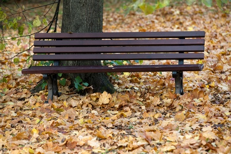 empty bench in the park in autumn