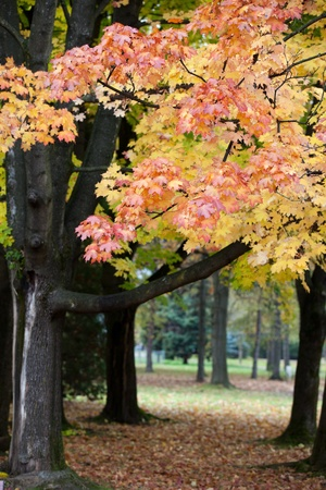 beautiful autumn trees in the park  photo