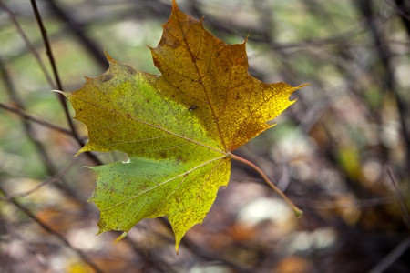 impressions: Autumn Impressions - solitary leaf falling