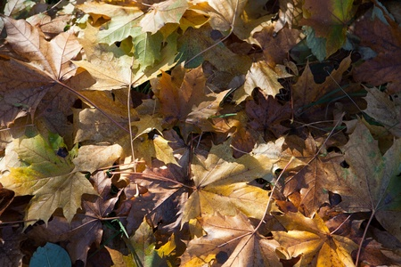 impression of leaves and autumn colors photo