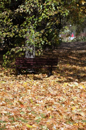 empty bench in the park in autumn photo