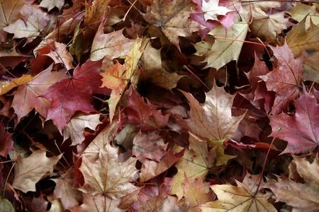 잎과 단풍의 인상 스톡 콘텐츠