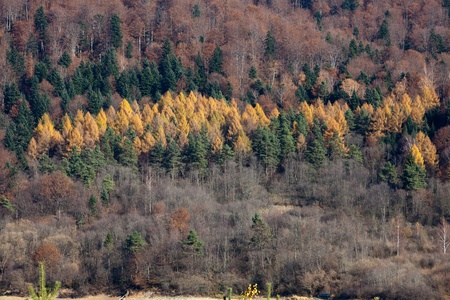 vibrant cottage: Autumn colors in the mountains