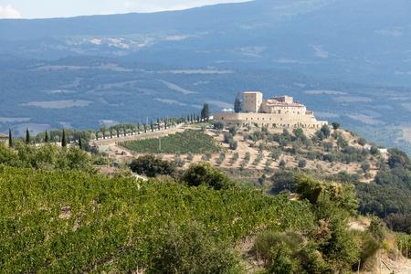best tuscan vineyards around Montalcino and San Antimo photo