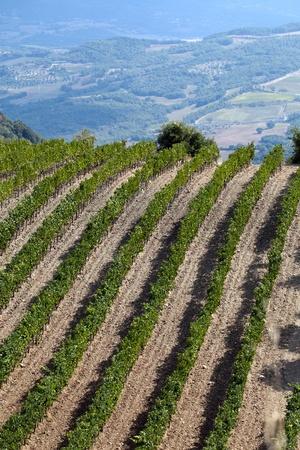 winegrowing: best tuscan vineyards around Montalcino and San Antimo