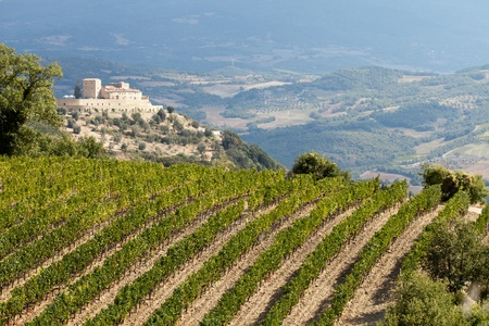 best tuscan vineyards around Montalcino and San Antimo Stock Photo - 11255282