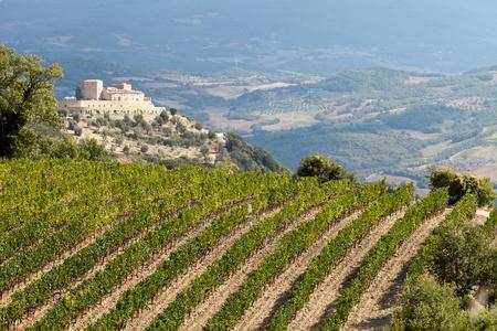 montalcino: best tuscan vineyards around Montalcino and San Antimo