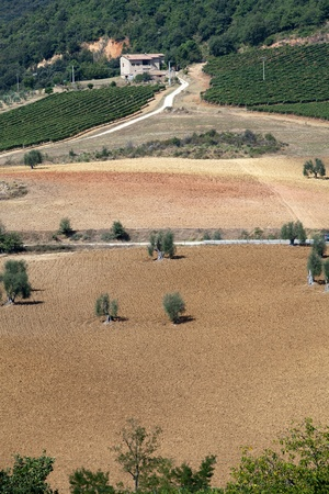 Tuscan landscape with vineyards, olive trees and cypresses photo