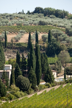 valdorcia: Tuscan landscape with vineyards, olive trees and cypresses