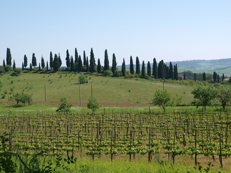 The landscape of the Val d'Orcia. Tuscany. Italiy Stock Photo - 12337325