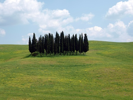 valdorcia: The landscape of the Val d'Orcia. Tuscany.