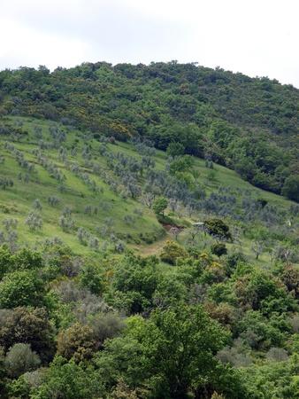 sant'antimo: The hills surrounding Abbey of SantAntimo Stock Photo