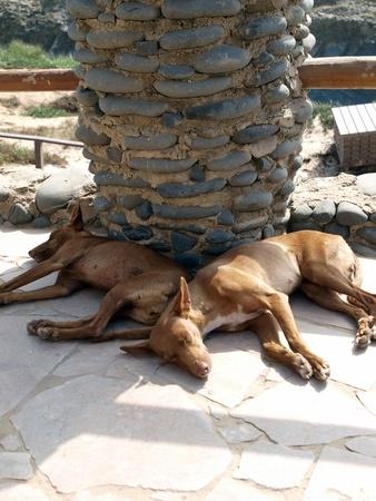 Season canine siesta in Praia Castelejo, Algarve , Portugal Stock Photo - 12344889