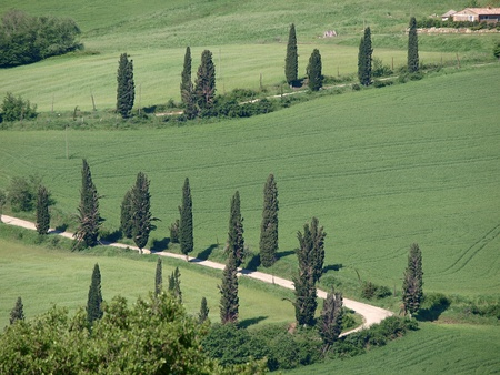 The landscape of the Val d'Orcia. Tuscany. Italiy photo