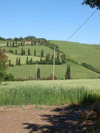 The landscape of the Val d'Orcia. Tuscany. Italiy Stock Photo - 12336187