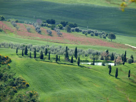The landscape of the Val d�Orcia. Tuscany. Italy photo