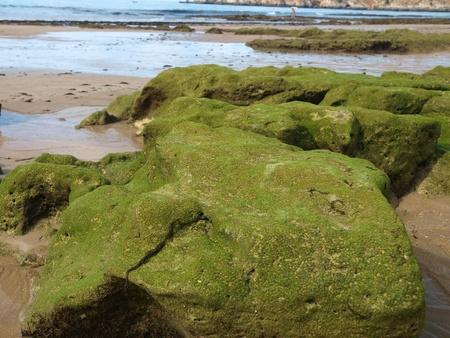 Algarve coast at low tide the ocean Stock Photo - 12743458