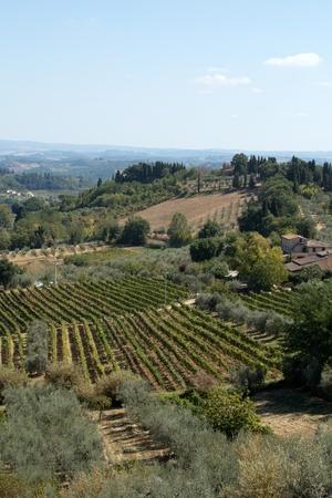 bowery: Hills around San Gimignano  Tuscany