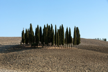 The landscape of the  Tuscany. Italy Stock Photo - 13137055