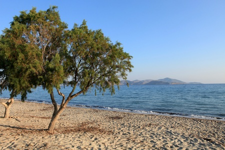 Greece. Kos island. Tigaki beach. Stock Photo - 13282877