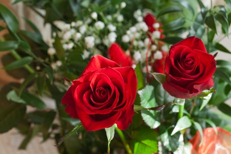 red rose Archivio Fotografico