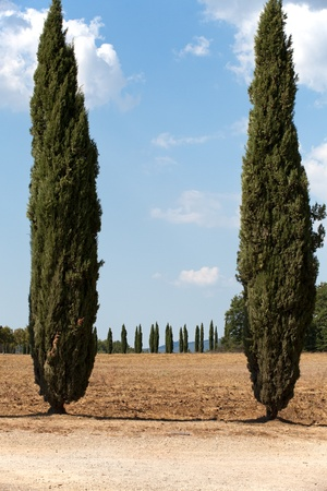 The landscape of the  Tuscany. Italy Stock Photo - 13816304