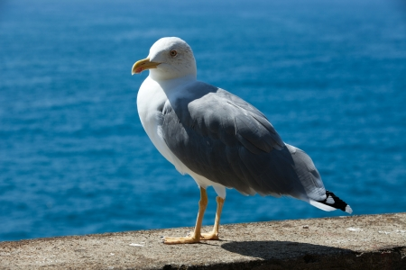 Gull on the background of the sea photo