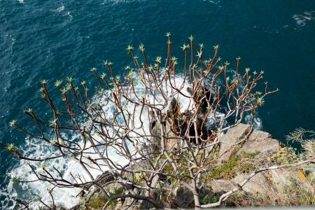 Cliffs in Manarola.   Cinque Terre, Liguria, Italy photo