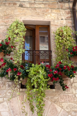 flowers hangs on the window of a home photo