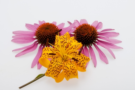 Pink coneflower and yellow lily photo
