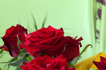 Beauty Red Roses photo