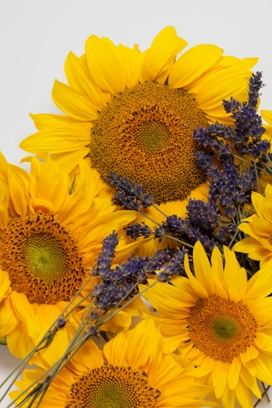 Sunflowers and Lavender  isolated on white background Stock Photo - 14658596