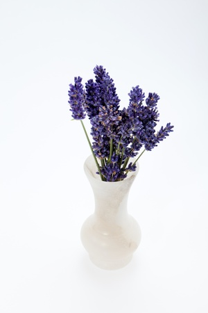 Lavender  isolated on white background Stock Photo - 14658421