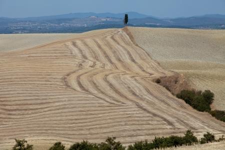 montalcino: Crete Senesi - The landscape of the  Tuscany. Italy Stock Photo