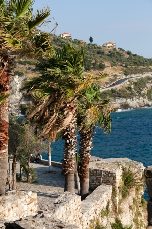 palm trees blowing in the wind photo